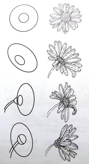 Как нарисовать букет ромашки поэтапно