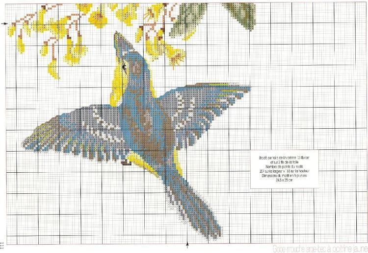 Схема вышивки крестом туканы 43